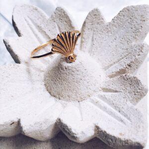 Anillo shell